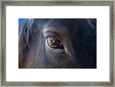 Equine In Sight Framed Print by Sheryl Cox