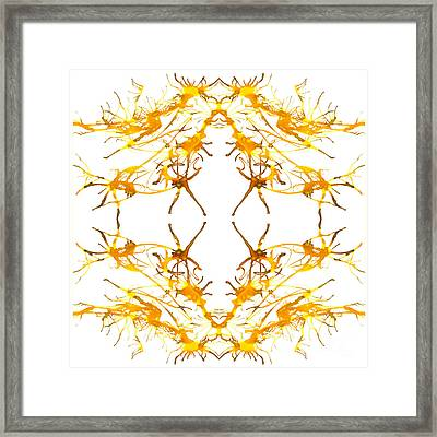 Equis Framed Print by Lyndsey Warren