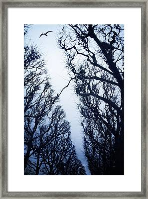 Escape Framed Print by Cambion Art