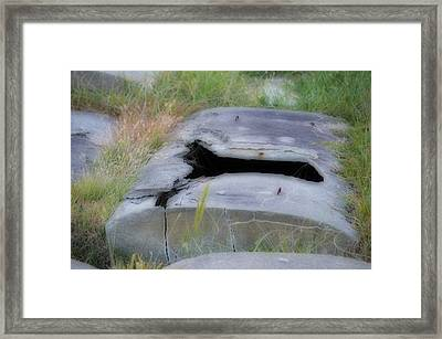 Escapee  Framed Print by Quita Jean