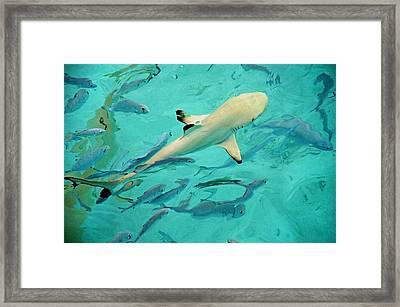 Escort  Framed Print by Jenny Rainbow
