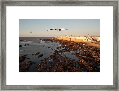 Essaouira Framed Print by Daniel Kocian