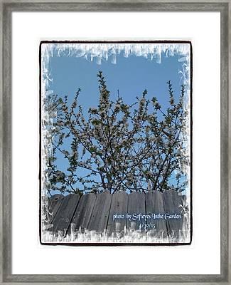 Essence Of Nature Awakening Framed Print by Annette Abbott