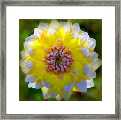 Essence Of Spring Framed Print by Karen Wiles