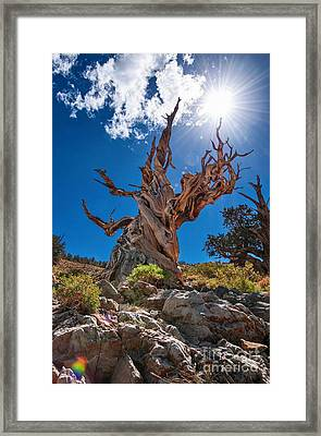 Eternity - Dramatic View Of The Ancient Bristlecone Pine Tree With Sun Burst. Framed Print by Jamie Pham
