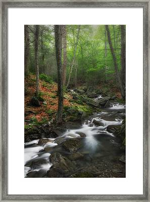 Ethereal Forest Framed Print by Bill Wakeley