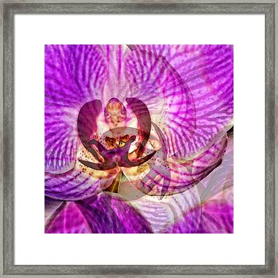 Ethereal Orchid By Sharon Cummings Framed Print by Sharon Cummings