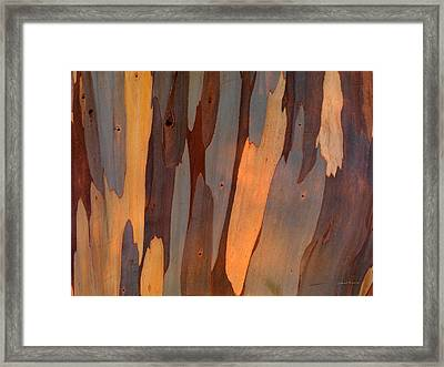 Eucalyptus Form 6 Framed Print by Leland D Howard