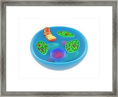 Eukaryotic Cell Genomes Framed Print by Science Photo Library