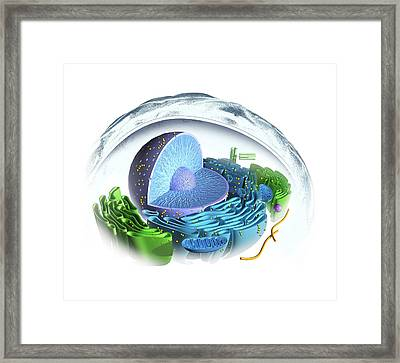 Eukaryotic Cell Framed Print by Henning Dalhoff