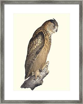 Eurasian Eagle-owl, 19th Century Artwork Framed Print by Science Photo Library