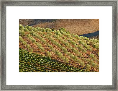 Europe, Italy, Tuscany, Vineyard Framed Print by Terry Eggers