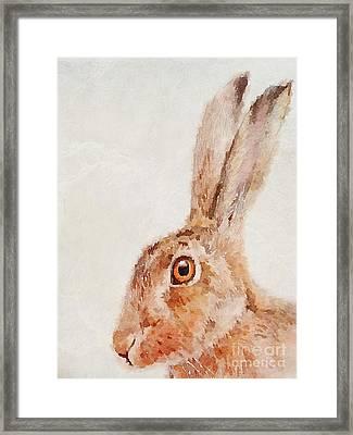 European Hare Watercolor Framed Print by John Edwards