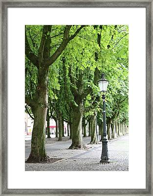European Park Trees Framed Print by Carol Groenen