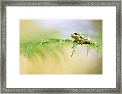 European Tree Frog Framed Print by Dirk Ercken