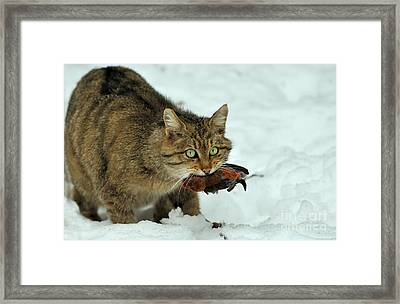 European Wildcat Framed Print by Reiner Bernhardt