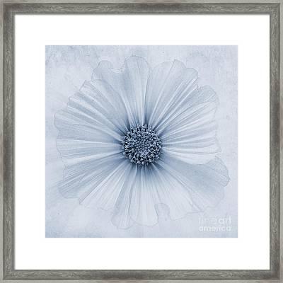 Evanescent Cyanotype Framed Print by John Edwards