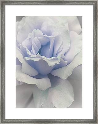 Evan's Rose Framed Print by  The Art Of Marilyn Ridoutt-Greene
