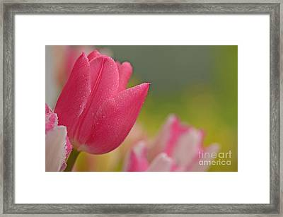 Even Guys Like Pink Framed Print by Nick  Boren