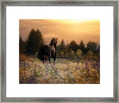 Evening Falls Framed Print by Pamela Hagedoorn