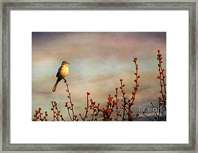 Evening Mocking Bird Framed Print by Darren Fisher