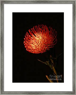 Evening Of Passion Framed Print by Inspired Nature Photography Fine Art Photography
