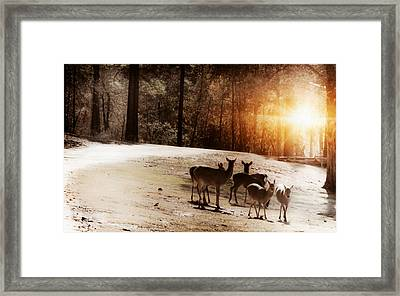 Evening Social  Framed Print by Kim Henderson