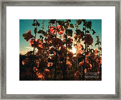 Evening Sun Framed Print by Connie Ens
