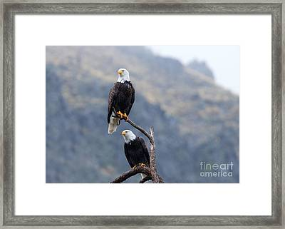 Ever Watchful Framed Print by Mike Dawson