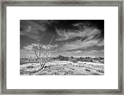 Everglades Coastal Prairies Bw Framed Print by Rudy Umans