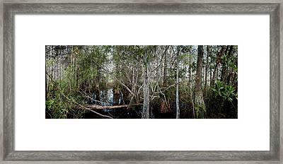 Everglades Swamp-1 Framed Print by Rudy Umans