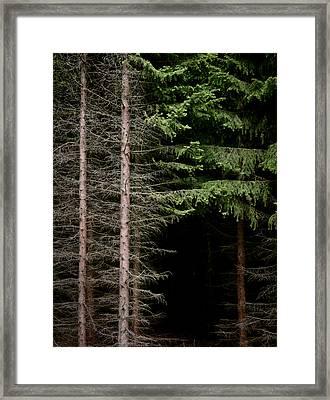Evergreen And Brown Framed Print by Odd Jeppesen