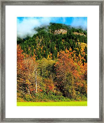 Evergreen Color Framed Print by Benjamin Yeager