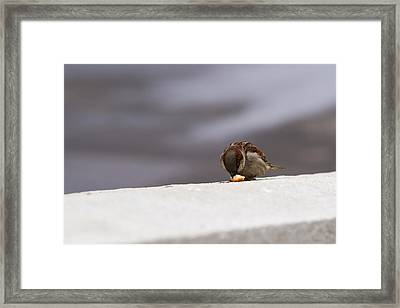 Every Day Brings Its Own Bread - Featured 3 Framed Print by Alexander Senin