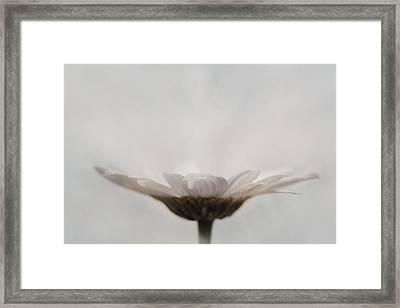 Every Flower Framed Print by Lori Deiter