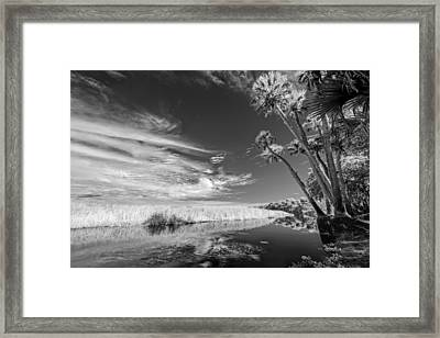 Every Other Tree Framed Print by Jon Glaser