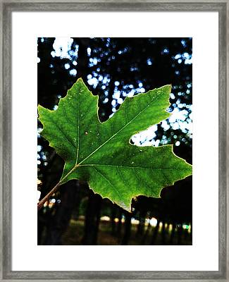 Every Story Has A Beginning... Framed Print by Lucy D