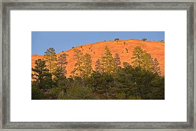 Every Tree In Its Shadow Framed Print by Christine Till