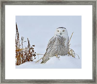 Everywhere Framed Print by Tony Beck