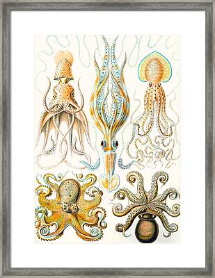 Examples Of Various Cephalopods Framed Print by Ernst Haeckel