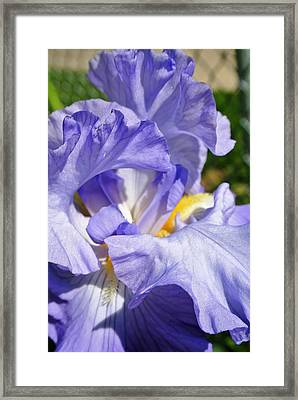 Exotic Beauty  Framed Print by Arielle Cunnea