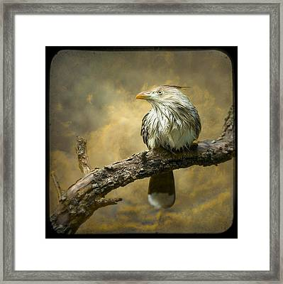 Exotic Bird - Guira Cuckoo Bird Framed Print by Gary Heller