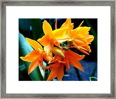 Exotic Orange Framed Print by Karen Wiles