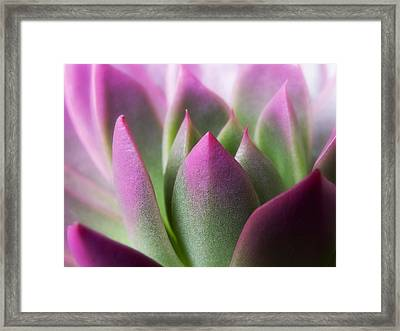 Exotic - Pink Purple Green Flower Landscape Photograph Framed Print by Artecco Fine Art Photography