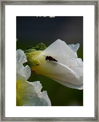 Explorer Framed Print by Wild Thing