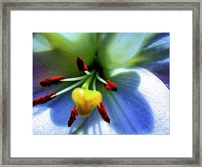 Extrem Lily Heart Framed Print by Danielle  Parent