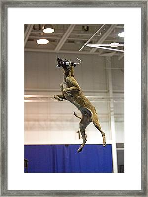 Extreme Vertical 10 Framed Print by Gerald Marella