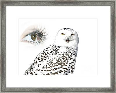 Eye Of Purity And The Mysterious Snowy Owl  Framed Print by Inspired Nature Photography Fine Art Photography