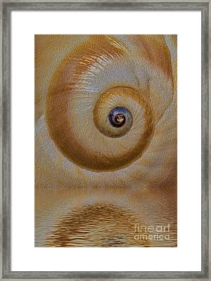 Eye Of The Snail Framed Print by Susan Candelario