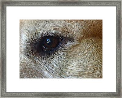 Eye See You Framed Print by Lisa Phillips